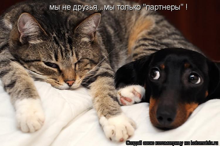 """Котоматрица: мы не друзья...мы только """"партнеры"""" !"""
