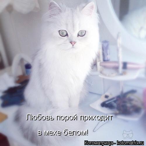Котоматрица: Любовь порой приходит в мехе белом!