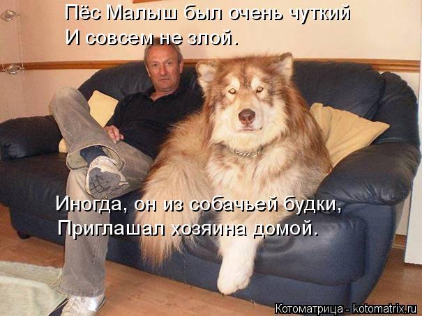 Котоматрица: Пёс Малыш был очень чуткий И совсем не злой. Иногда, он из собачьей будки, Приглашал хозяина домой.