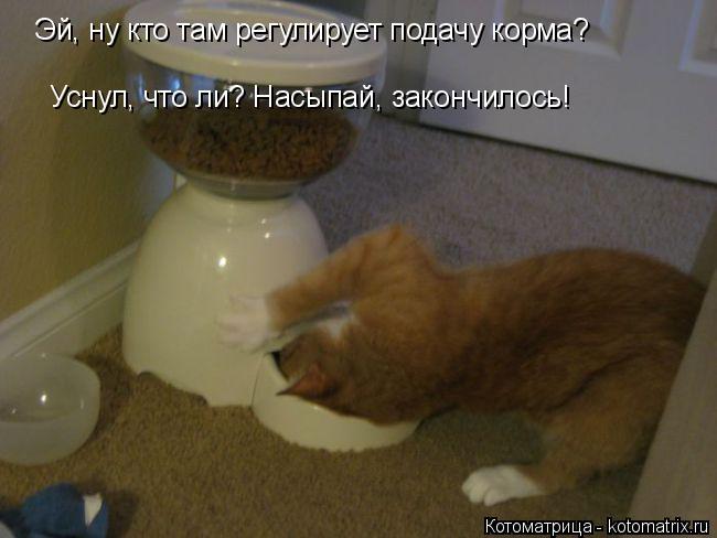 Котоматрица: Эй, ну кто там регулирует подачу корма? Уснул, что ли? Насыпай, закончилось!