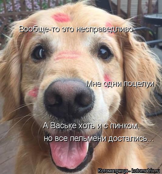 Котоматрица: Вообще-то это несправедливо- Мне одни поцелуи но все пельмени достались... А Ваське хоть и с пинком,