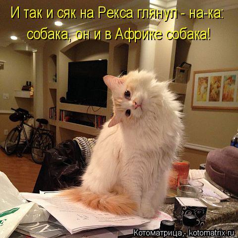 Котоматрица: И так и сяк на Рекса глянул - на-ка: собака, он и в Африке собака!