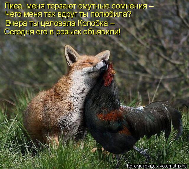 Котоматрица: Лиса, меня терзают смутные сомнения – Чего меня так вдруг ты полюбила? Вчера ты целовала Колобка –  Сегодня его в розыск объявили!
