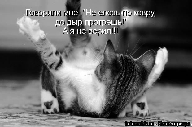 "Котоматрица: Говорили мне: ""Не елозь по ковру, до дыр протрешь!"" А я не верил!!!"