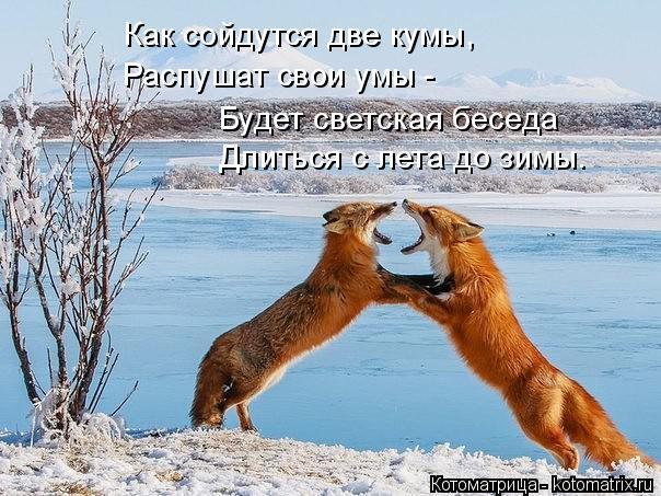 Котоматрица: Как сойдутся две кумы, Распушат свои умы - Будет светская беседа Длиться с лета до зимы.