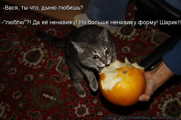 """Котоматрица: -""""люблю""""?! Да её ненавижу! Но больше ненавижу форму! Шарик!!! -Вася, ты что, дыню любишь?"""
