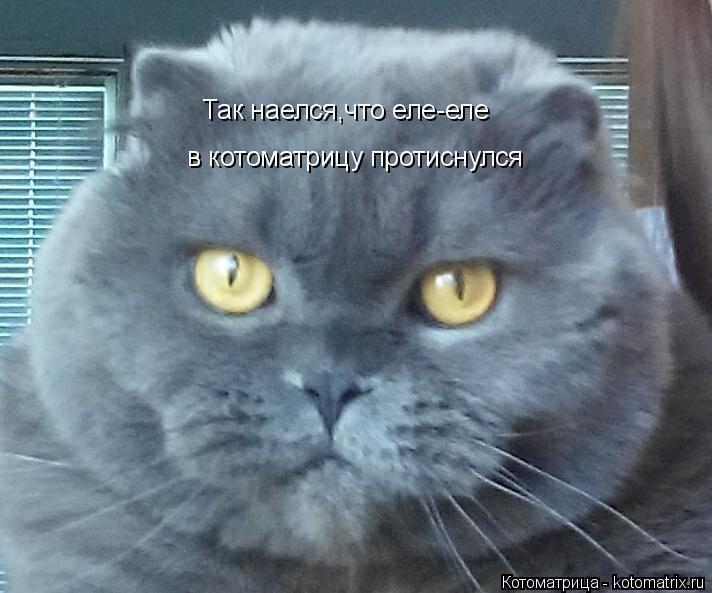 Котоматрица: Так наелся,что еле-еле в котоматрицу протиснулся