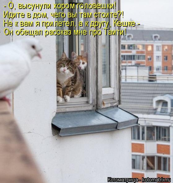 Котоматрица: - О, высунули хором головешки! Идите в дом, чего вы там стоите?! Не к вам я прилетел, а к другу, Кешке - Он обещал рассказ мне про Таити!