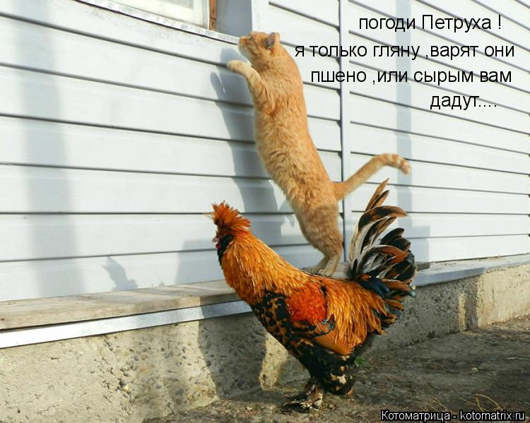 Котоматрица: погоди Петруха ! я только гляну ,варят они  пшено ,или сырым вам  дадут....