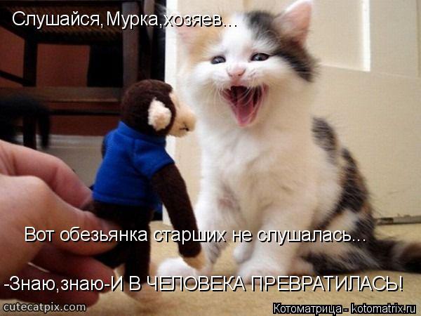 Котоматрица: Слушайся,Мурка,хозяев... Вот обезьянка старших не слушалась... -Знаю,знаю-И В ЧЕЛОВЕКА ПРЕВРАТИЛАСЬ!