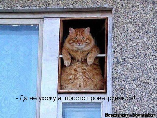 Котоматрица: - Да не ухожу я, просто проветриваюсь!