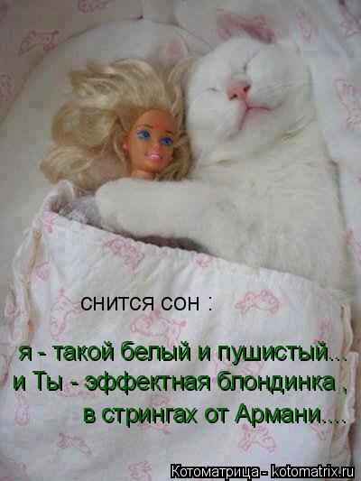 Котоматрица: снится сон : я - такой белый и пушистый... и Ты - эффектная блондинка , в стрингах от Армани....