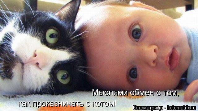 Котоматрица: Мыслями обмен о том, как проказничать с котом!