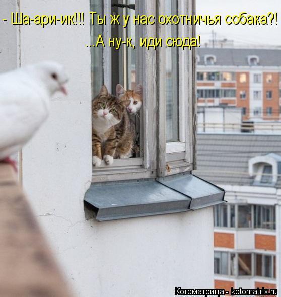 Котоматрица: - Ша-ари-ик!!! Ты ж у нас охотничья собака?! ...А ну-к, иди сюда!