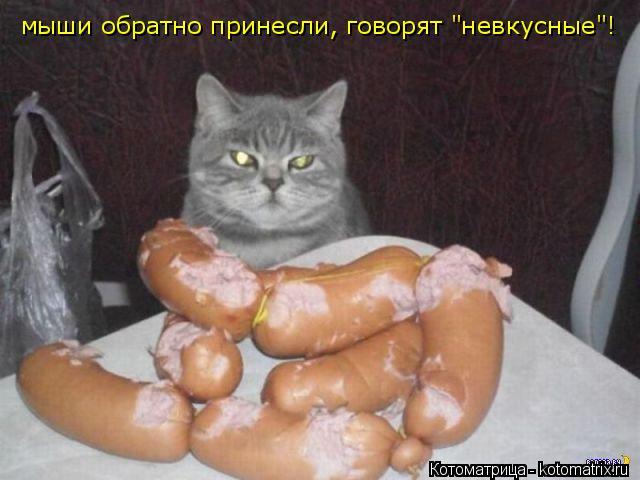 """Котоматрица: мыши обратно принесли, говорят """"невкусные""""!"""