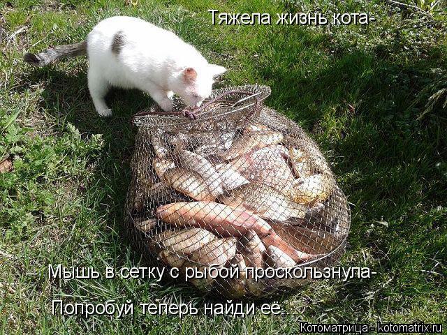 Котоматрица: Тяжела жизнь кота- Мышь в сетку с рыбой проскользнула- Попробуй теперь найди её...