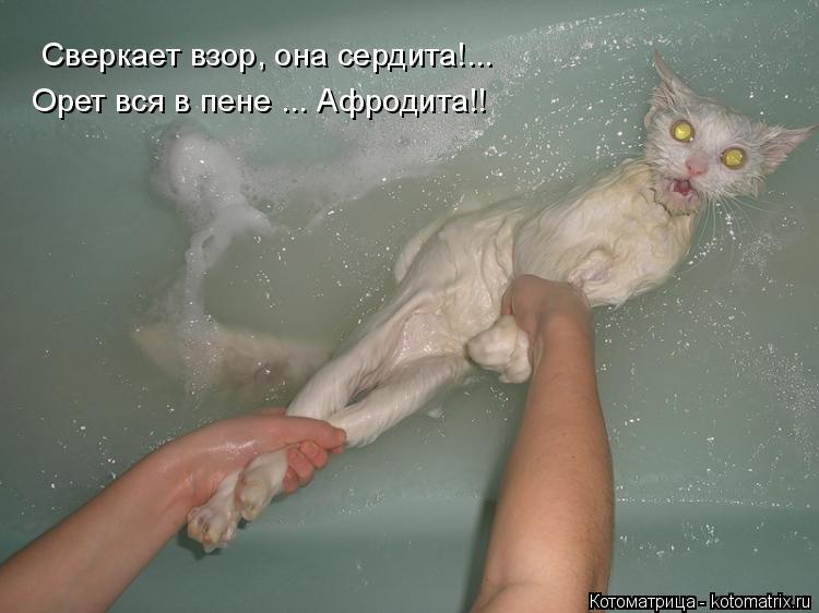 Котоматрица: Сверкает взор, она сердита!... Орет вся в пене ... Афродита!!