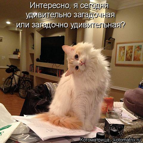 Котоматрица: Интересно, я сегодня  удивительно загадочная  или загадочно удивительная?