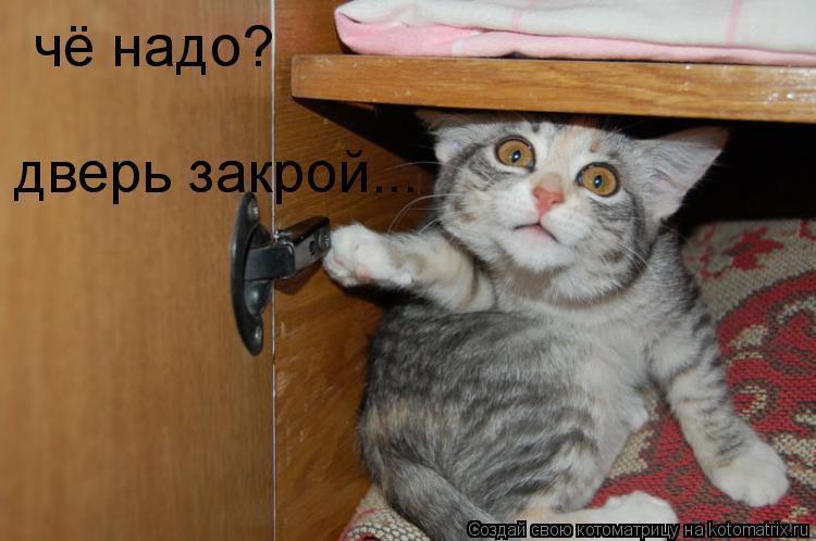 Котоматрица: чё надо? дверь закрой...