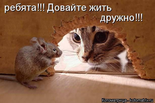 Котоматрица: ребята!!! Довайте жить дружно!!!