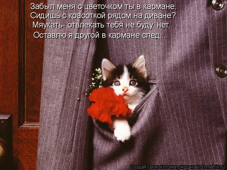 Котоматрица: Забыл меня с цветочком ты в кармане. Сидишь с красоткой рядом на диване? Мяукать- отвлекать тебя не буду, нет, Оставлю я другой в кармане след