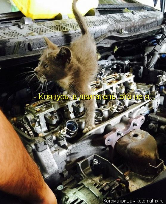 Котоматрица: - Клянусь, в двигатель ,это не я...