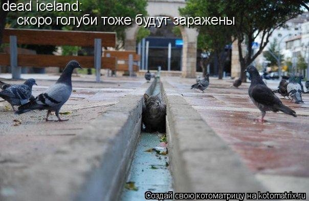 Котоматрица: dead iceland: скоро голуби тоже будут заражены