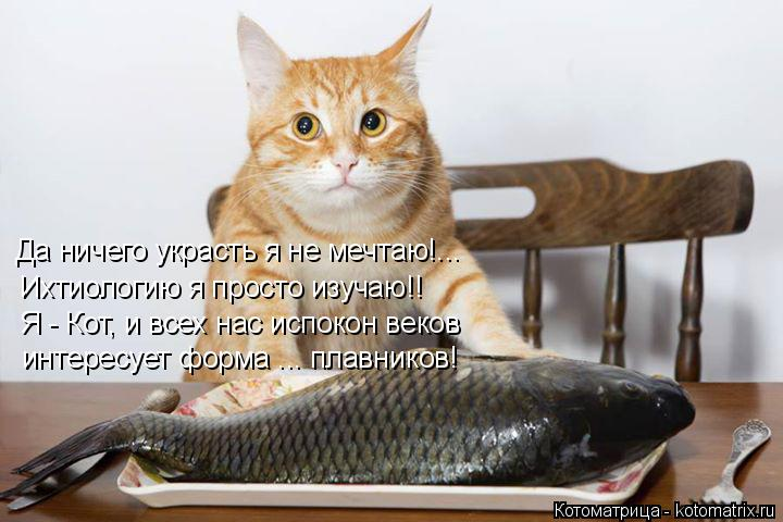 Котоматрица: Да ничего украсть я не мечтаю!... Ихтиологию я просто изучаю!! Я - Кот, и всех нас испокон веков интересует форма ... плавников!