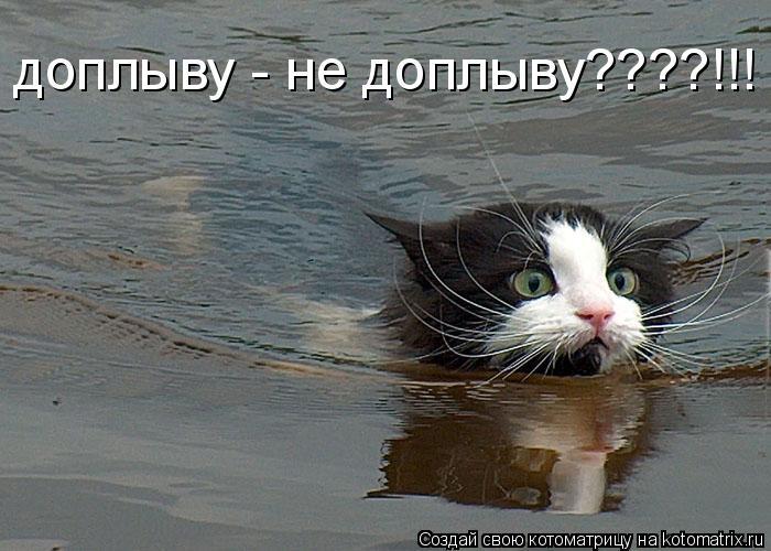 Котоматрица: доплыву - не доплыву????!!!