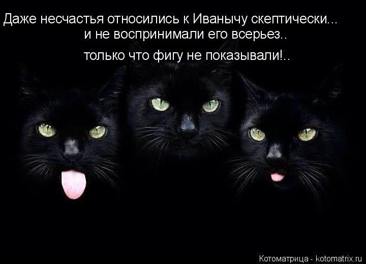 Котоматрица: Даже несчастья относились к Иванычу скептически... и не воспринимали его всерьез.. только что фигу не показывали!..
