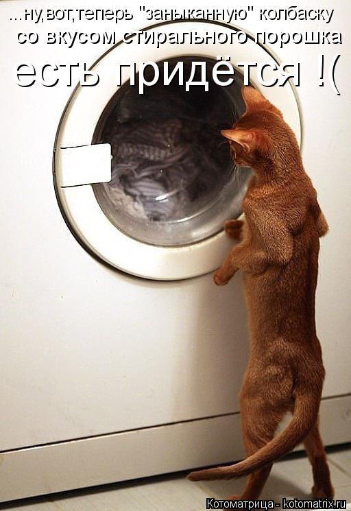 """Котоматрица: со вкусом стирального порошка ...ну,вот,теперь """"заныканную"""" колбаску  есть придётся !("""