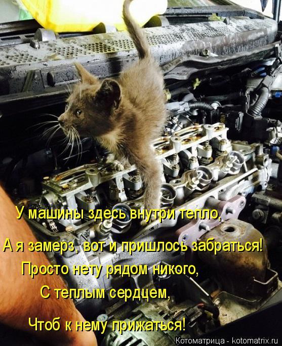 Котоматрица: У машины здесь внутри тепло, А я замерз, вот и пришлось забраться! Просто нету рядом никого, С теплым сердцем, Чтоб к нему прижаться!