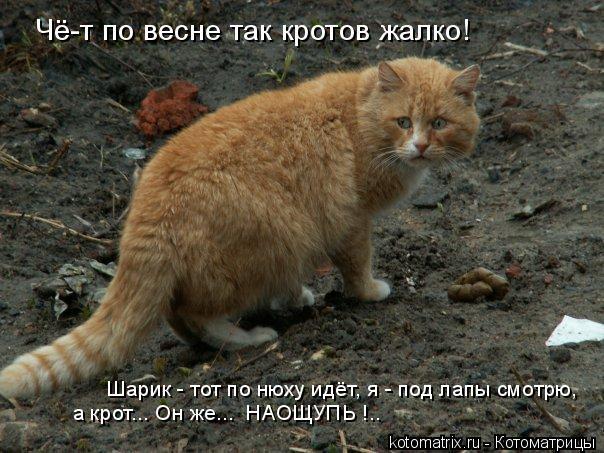 Котоматрица: Чё-т по весне так кротов жалко! Шарик - тот по нюху идёт, я - под лапы смотрю,  а крот... Он же...  НАОЩУПЬ !..