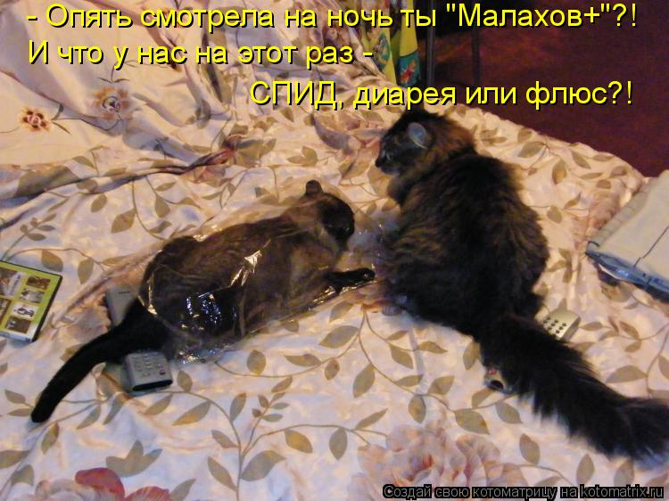 """Котоматрица: - Опять смотрела на ночь ты """"Малахов+""""?! И что у нас на этот раз - СПИД, диарея или флюс?!"""