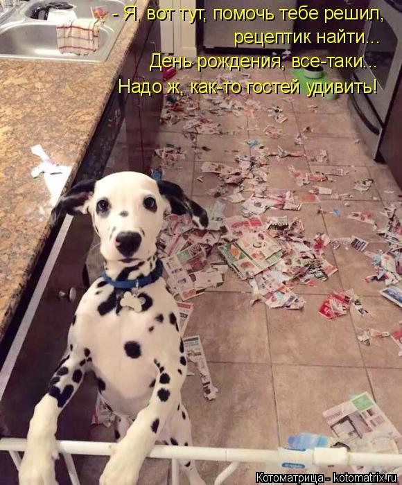 Котоматрица: - Я, вот тут, помочь тебе решил, рецептик найти... День рождения, все-таки... Надо ж, как-то гостей удивить!