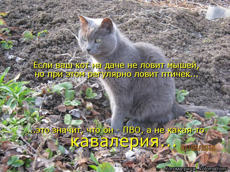 Котоматрица: Если ваш кот на даче не ловит мышей, но при этом регулярно ловит птичек... ...это значит, что он - ПВО, а не какая-то  кавалерия...