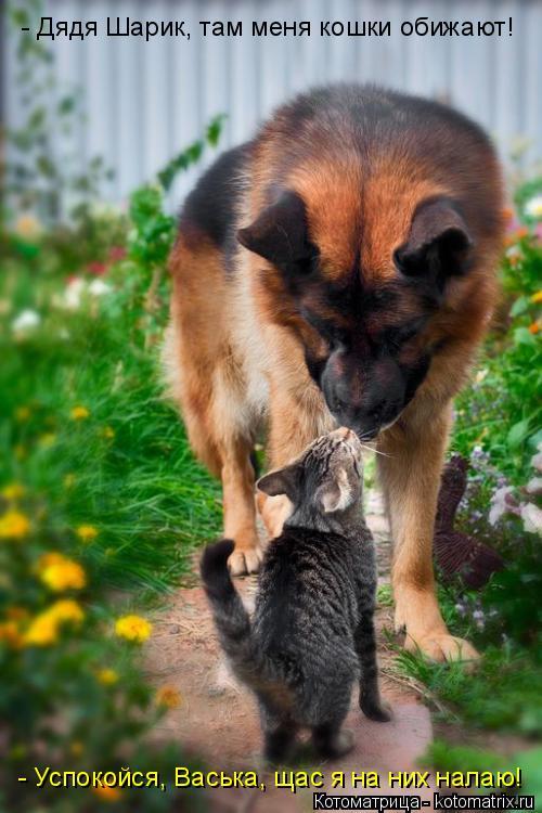 Котоматрица: - Дядя Шарик, там меня кошки обижают! - Успокойся, Васька, щас я на них налаю!