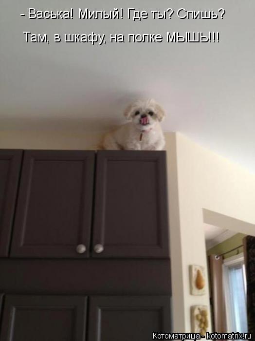 Котоматрица: - Васька! Милый! Где ты? Спишь? Там, в шкафу, на полке МЫШЬ!!!