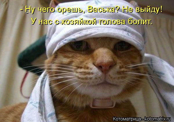 Котоматрица: -  - Ну чего орешь, Васька? Не выйду! У нас с хозяйкой голова болит.