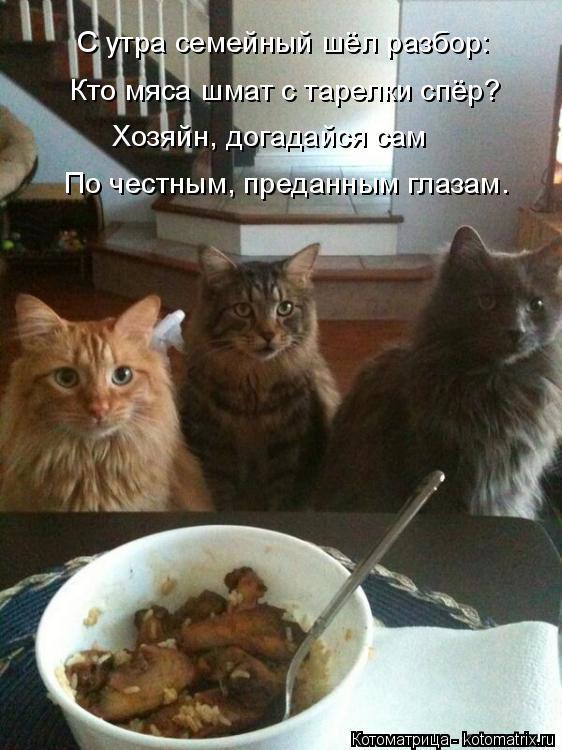 Котоматрица: С утра семейный шёл разбор: Кто мяса шмат с тарелки спёр? Хозяйн, догадайся сам По честным, преданным глазам.