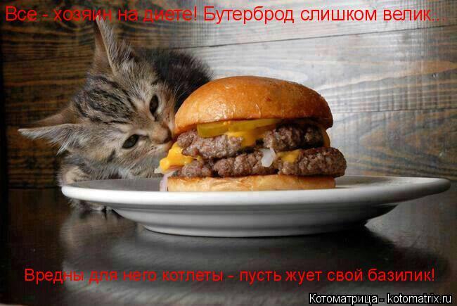 Котоматрица: Все - хозяин на диете! Бутерброд слишком велик... Вредны для него котлеты - пусть жует свой базилик!