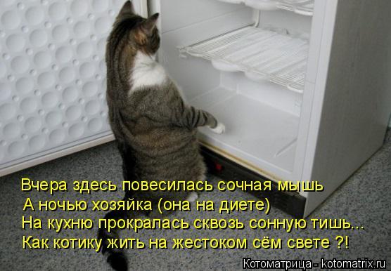Котоматрица: Вчера здесь повесилась сочная мышь А ночью хозяйка (она на диете) На кухню прокралась сквозь сонную тишь... Как котику жить на жестоком сём с
