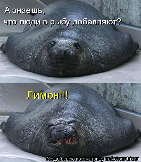 Котоматрица: что люди в рыбу добавляют? А знаешь, Лимон!!!
