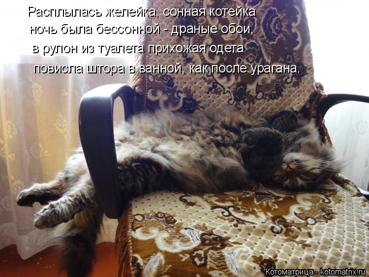 Котоматрица: Расплылась желейка, сонная котейка ночь была бессонной - драные обои, в рулон из туалета прихожая одета повисла штора в ванной, как после ур