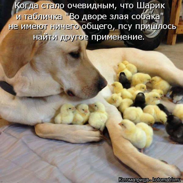 """Котоматрица: Когда стало очевидным, что Шарик и табличка """"Во дворе злая собака"""" не имеют ничего общего, псу пришлось  найти другое применение."""