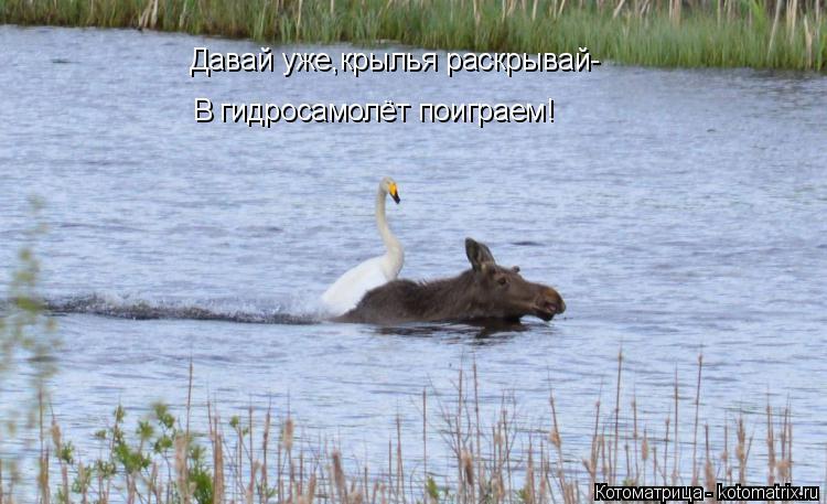 Котоматрица: Давай уже,крылья раскрывай- В гидросамолёт поиграем!