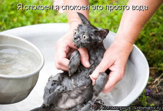Котоматрица: Я спокоен,я спокоен это просто вода
