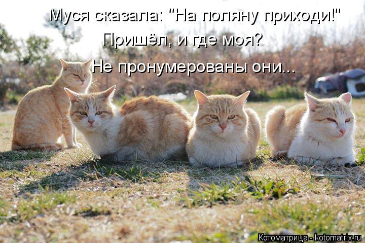 """Котоматрица: Муся сказала: """"На поляну приходи!"""" Пришёл, и где моя? Не пронумерованы они..."""