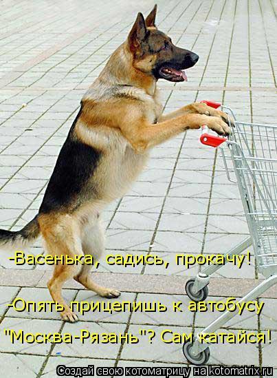 """Котоматрица: -Васенька, садись, прокачу! -Опять прицепишь к автобусу """"Москва-Рязань""""? Сам катайся!"""