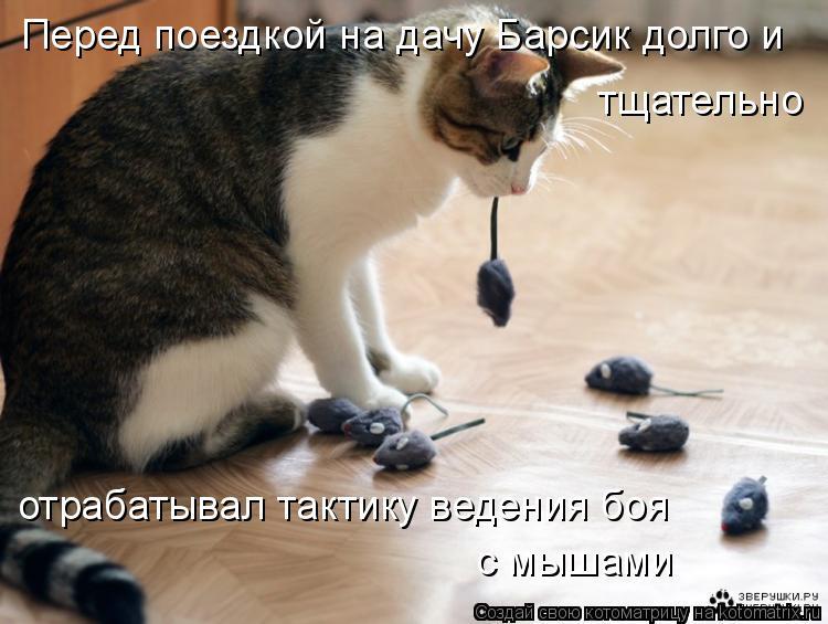 Котоматрица: Перед поездкой на дачу Барсик долго и  тщательно  отрабатывал тактику ведения боя с мышами